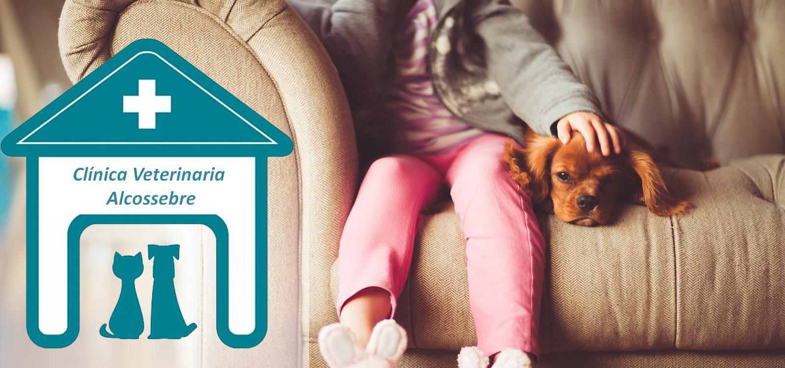 clinica_veterinaria_alcossebre_low_cost